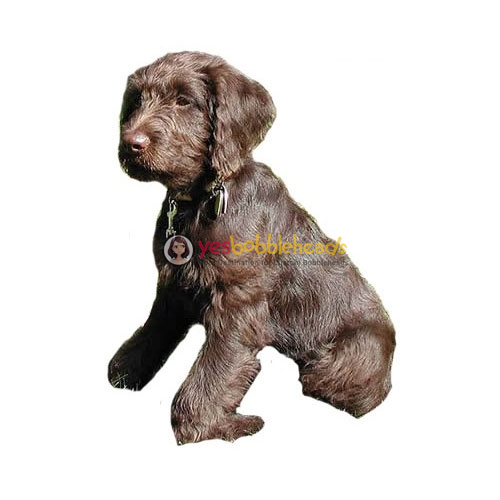 Picture of Custom Bobblehead Doll: Pet Dog Labradoodle
