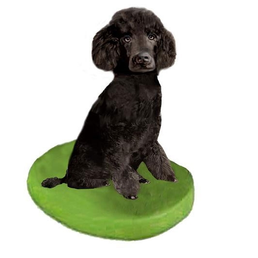 Picture of Custom Bobblehead Doll: Pet Dog Poodle Black Miniature